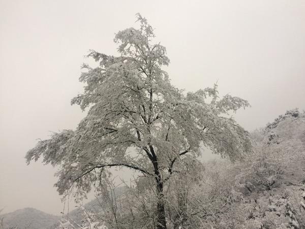 白石岭山雪